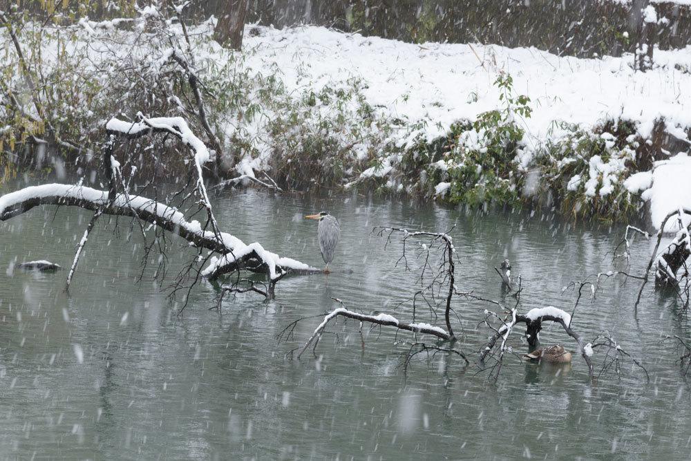 雪_b0036743_18043564.jpg