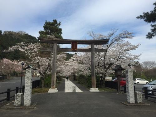 桜満開~!_c0331145_17534415.jpg