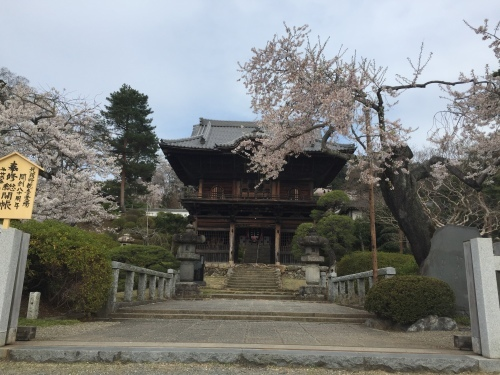 桜満開~!_c0331145_17534915.jpg