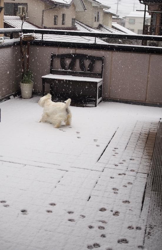 雪、雪、、、_d0317548_08411621.jpg