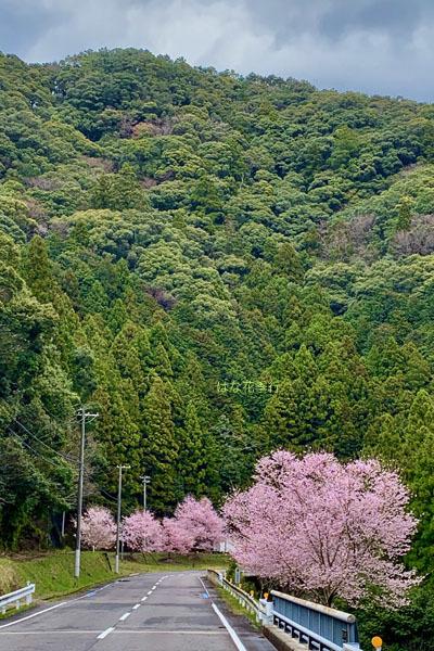 2020 桜記録_d0036450_07561790.jpg