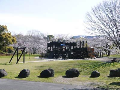菊池公園、菊池神社の桜photoコレクション 2020_a0254656_16534604.jpg