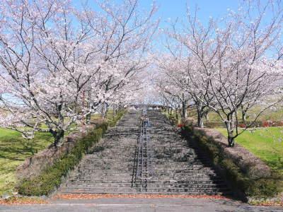 菊池公園、菊池神社の桜photoコレクション 2020_a0254656_18182427.jpg