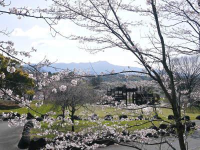 菊池公園、菊池神社の桜photoコレクション 2020_a0254656_18232543.jpg