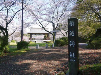 菊池公園、菊池神社の桜photoコレクション 2020_a0254656_18265586.jpg