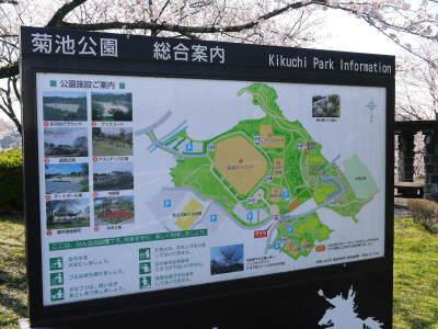 菊池公園、菊池神社の桜photoコレクション 2020_a0254656_18292344.jpg