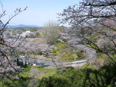 菊池公園、菊池神社の桜photoコレクション 2020_a0254656_18314051.jpg