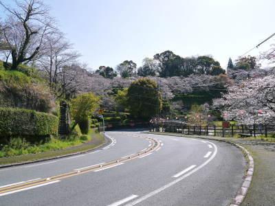 菊池公園、菊池神社の桜photoコレクション 2020_a0254656_18345256.jpg