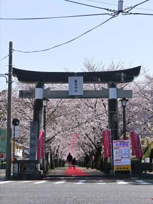 菊池公園、菊池神社の桜photoコレクション 2020_a0254656_18440487.jpg