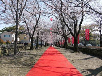 菊池公園、菊池神社の桜photoコレクション 2020_a0254656_18460528.jpg