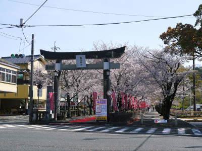 菊池公園、菊池神社の桜photoコレクション 2020_a0254656_18522957.jpg