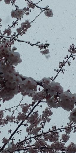 春と冬のコラボ…山田パンダ散歩より。_b0096957_10025554.jpg
