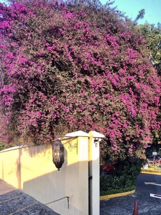 アンティグアのホテル Soleil La Antigua @グアテマラ_a0092659_13584303.jpeg