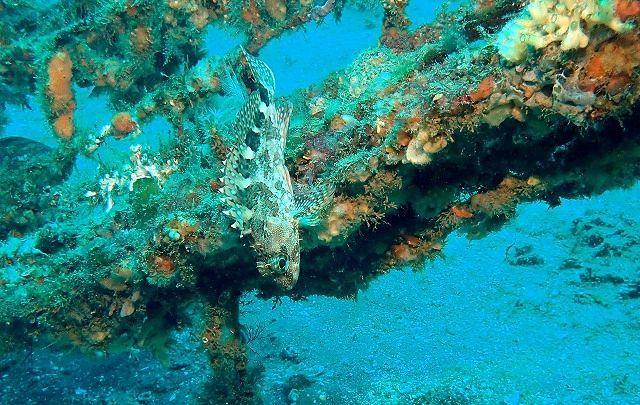 0329 Research Diving  3 序論2 & 歴史と沿革_b0075059_05530060.jpg