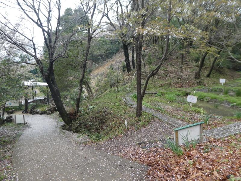 炭竃跡周辺とダム周辺の整備・・・うみべの森_c0108460_17364155.jpg