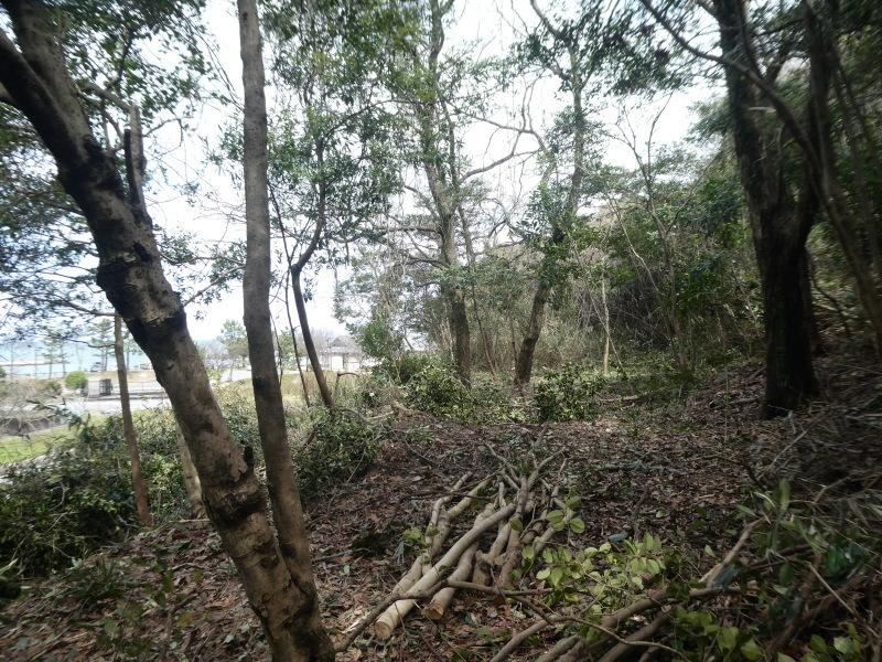 炭竃跡周辺とダム周辺の整備・・・うみべの森_c0108460_17430731.jpg