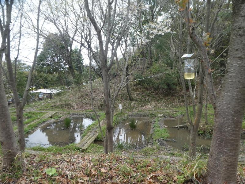炭竃跡周辺とダム周辺の整備・・・うみべの森_c0108460_17443497.jpg