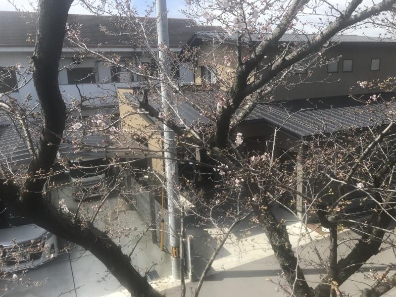 桜が咲き始めました。_d0177560_11414203.jpeg