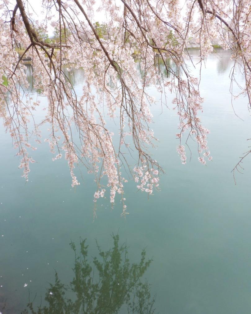三ツ寺公園で サクラをメインに_c0305565_17354531.jpg