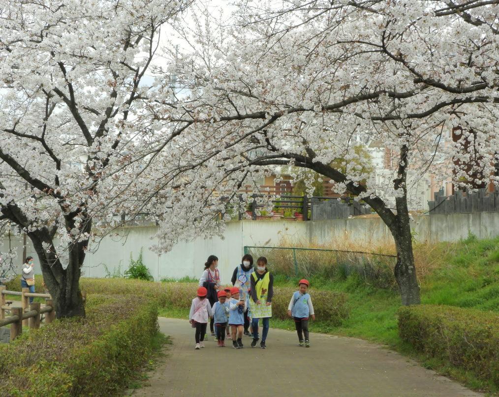 三ツ寺公園で サクラをメインに_c0305565_17370278.jpg