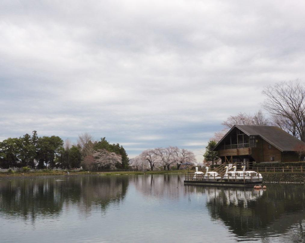三ツ寺公園で サクラをメインに_c0305565_17381092.jpg