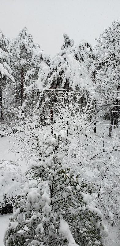 今年一番の大雪そして..._b0222066_07124403.jpg