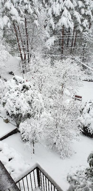 今年一番の大雪そして..._b0222066_07124433.jpg