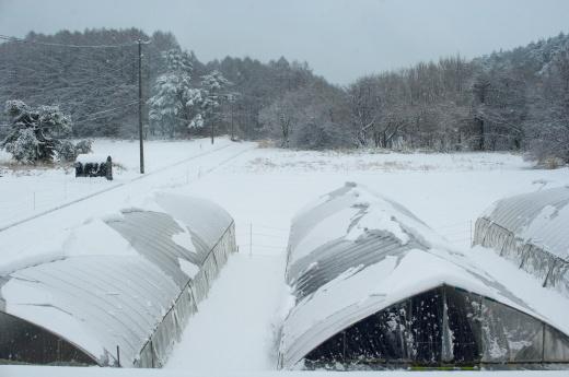 3/29に大雪_c0110869_11483568.jpg