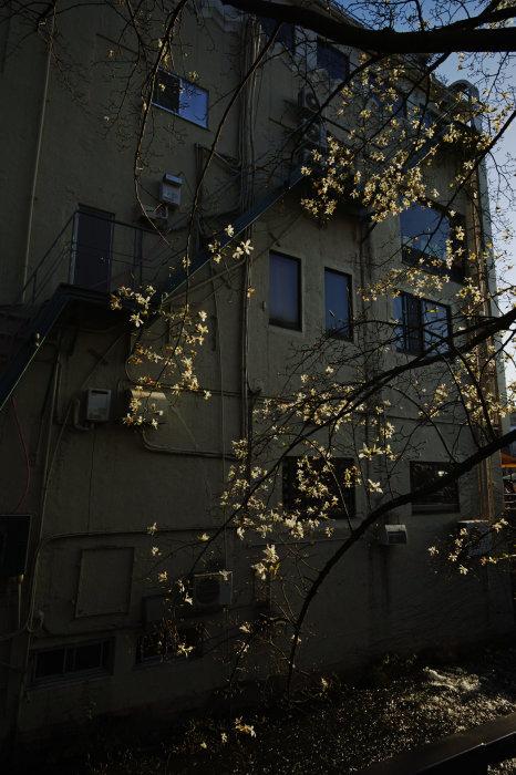 桜 2020_f0021869_21391738.jpg