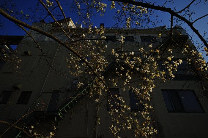 桜 2020_f0021869_21391774.jpg