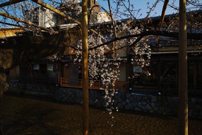 桜 2020_f0021869_21391836.jpg