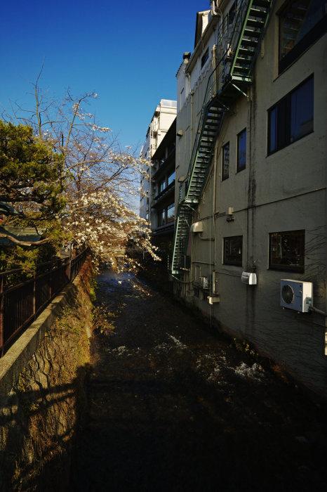 桜 2020_f0021869_21391972.jpg