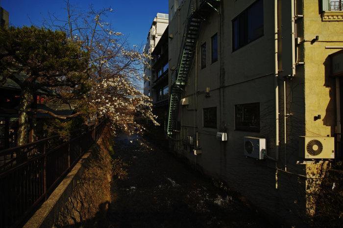 桜 2020_f0021869_21391987.jpg
