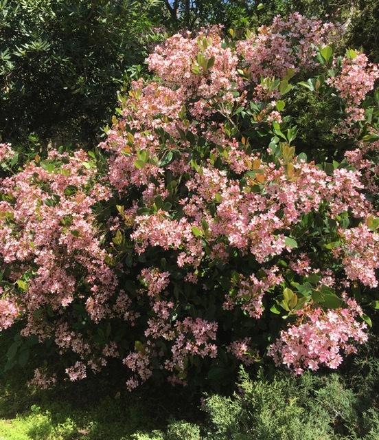 穏やかな春の日_e0350971_14084182.jpg