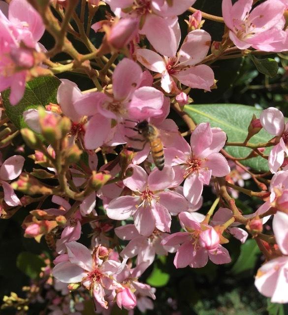 穏やかな春の日_e0350971_14084403.jpg