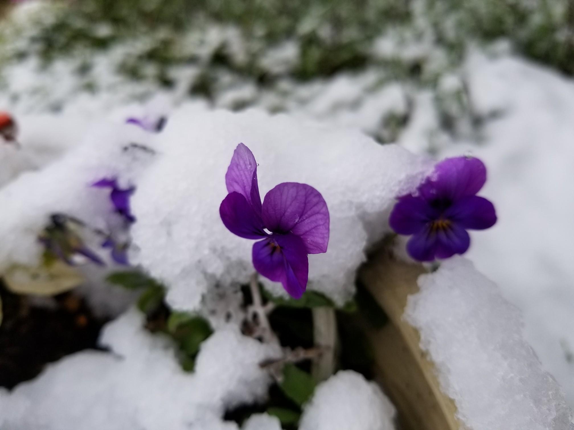 春の雪_c0056473_14032839.jpg
