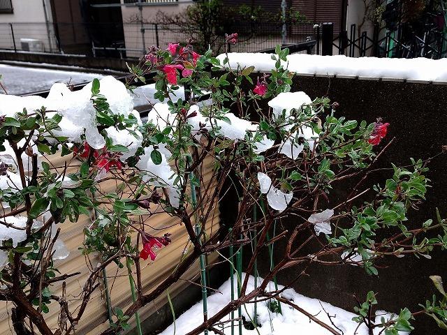 季節外れの降雪_d0019074_14543591.jpg