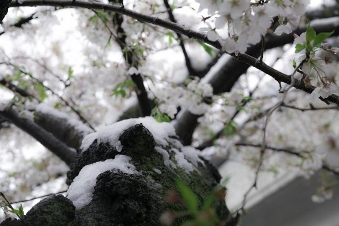 なごり雪_b0312075_17424137.jpg