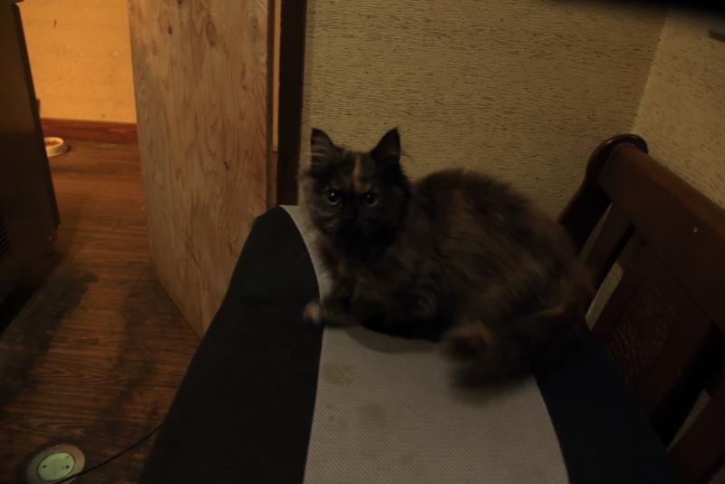 子猫が戻ってきました!!!_f0075075_21423149.jpg