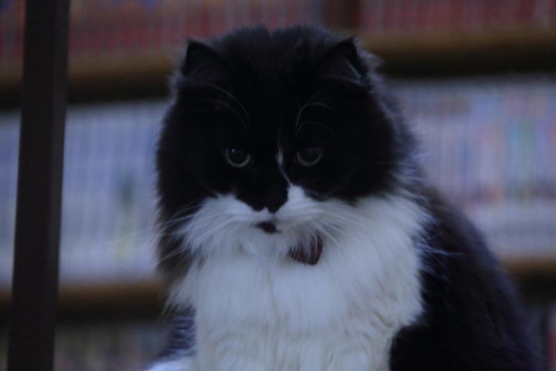 子猫が戻ってきました!!!_f0075075_21460827.jpg