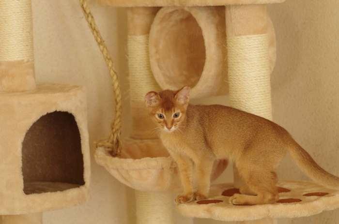 猫タワー購入!_e0139376_17561752.jpg