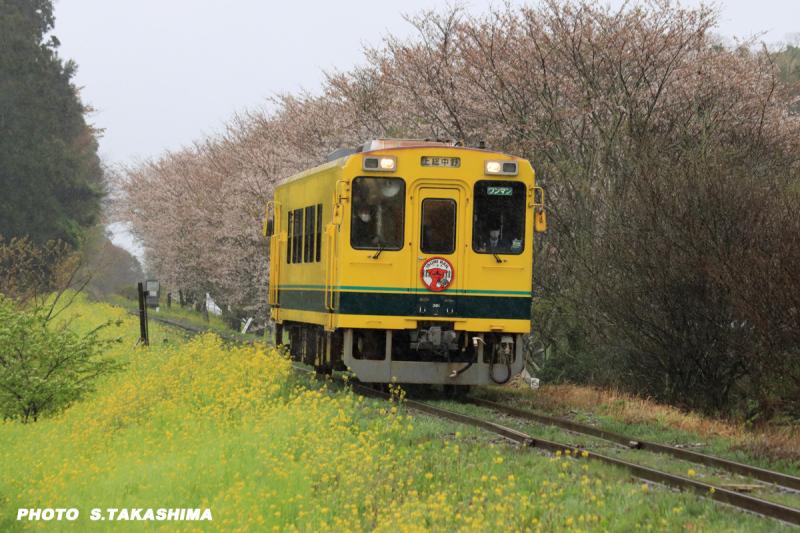 ローカル線 いすみ鉄道_b0368378_14255194.jpg