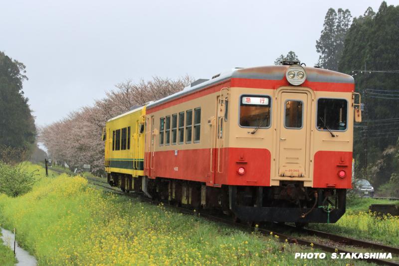 ローカル線 いすみ鉄道_b0368378_14260762.jpg