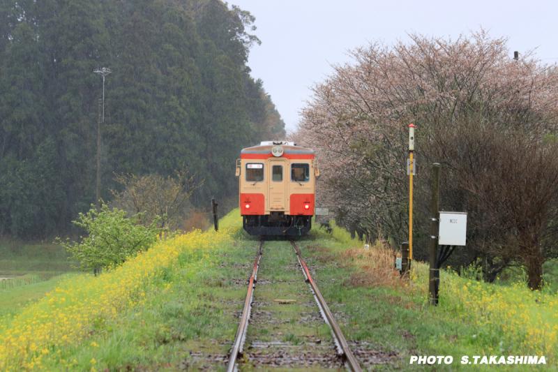 ローカル線 いすみ鉄道_b0368378_14262113.jpg