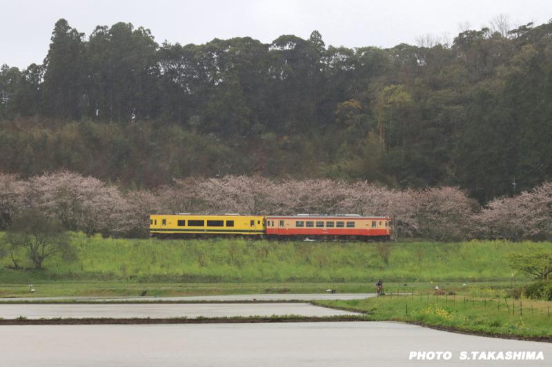 ローカル線 いすみ鉄道_b0368378_14263501.jpg