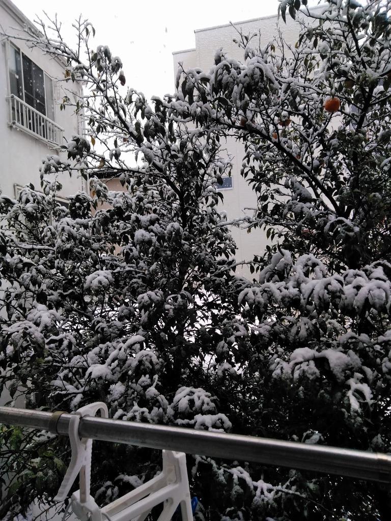 雪!!志木&朝霞_d0061678_10211837.jpg