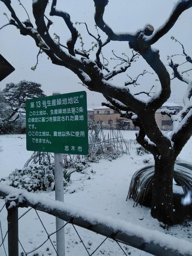 雪!!志木&朝霞_d0061678_10213984.jpg