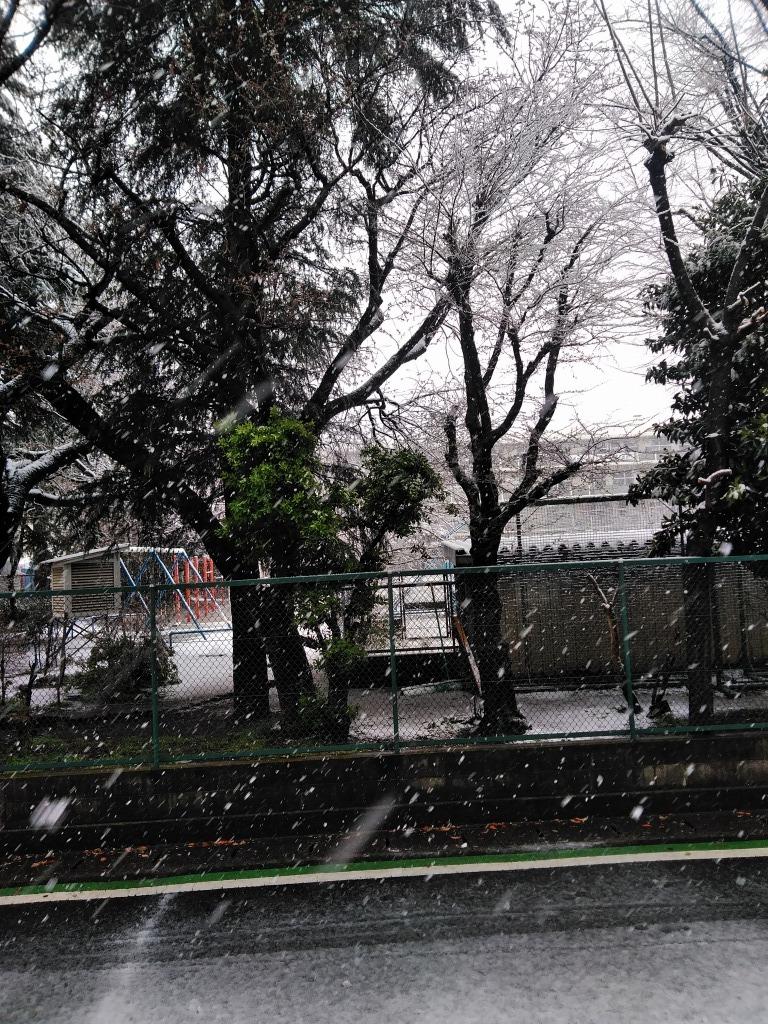雪!!志木&朝霞_d0061678_10240646.jpg