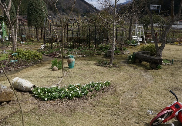 スイセンが咲き始めました_e0365880_21382710.jpg