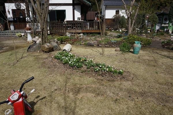 スイセンが咲き始めました_e0365880_21384218.jpg